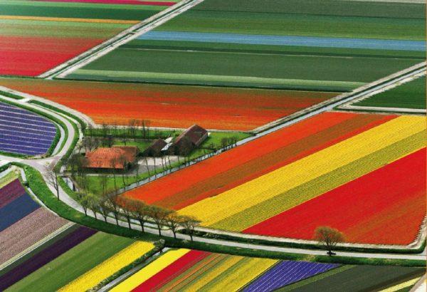 Tulip flight